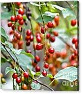 Summer Wild Berries Acrylic Print