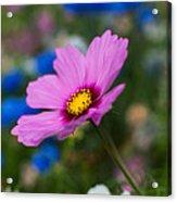 Summer Wild Blooms Acrylic Print