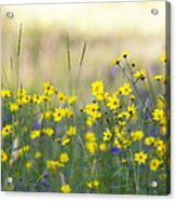 Summer Wildflowers On The Rim  Acrylic Print