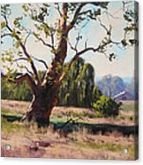 Summer Willow Acrylic Print by Graham Gercken