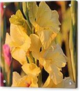 Summer Yellow Gladiolus Acrylic Print
