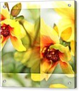 Summer Yellow Two Acrylic Print by Cathie Tyler