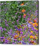 Summer's Colors Acrylic Print