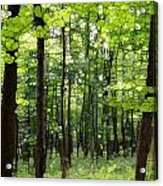 Summer's Green Forest Abstract Acrylic Print