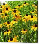 Summer's Love Acrylic Print by Andrea Dale
