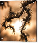 Sun And Frost Acrylic Print