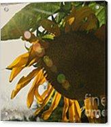 Sun And Sunflower Acrylic Print