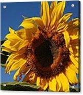 Sun Blessed Acrylic Print