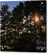 Sun Burst Through The Trees Acrylic Print