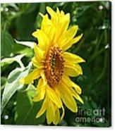 Sun Dancer  Acrylic Print