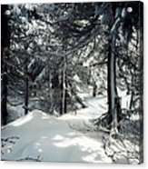 Sun Dappled Snow Acrylic Print
