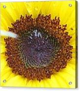 Sun Dial Acrylic Print