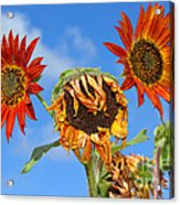 Sun Drenched In Autumn By Diana Sainz Acrylic Print
