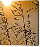 Sun Flood Acrylic Print