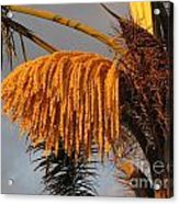 Sun Glowing Palm Acrylic Print