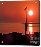 Sun Gull Acrylic Print