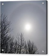 Sun Halo Through The Trees Acrylic Print