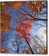 Sun In Fall Forest Canopy  Acrylic Print