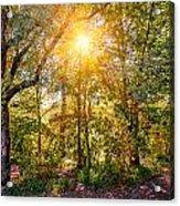 Sun In The Autumn Forest Acrylic Print