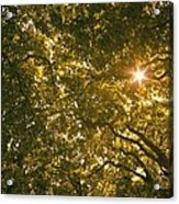 Sun In The Trees Acrylic Print