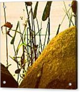 Sun Kissed Grass And Rocks   Acrylic Print