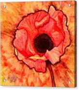 Sun Kissed Poppy Acrylic Print