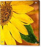 Sun-kissed Sunflower Acrylic Print