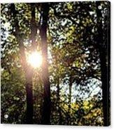 Sun Kissed Trees Acrylic Print