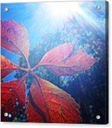 Sun Leaf Acrylic Print