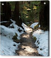 Sun Lit Trail, Olympic National Park Acrylic Print