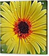 Sun On A Rainy Day Acrylic Print
