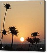 Sun Rise On Bethsaida Acrylic Print