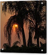 Sun Setting Behind The Queen Palm Covered In Smoke Acrylic Print