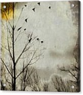 The Sun Splashed Unto A Gray Day Acrylic Print