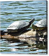 Sun Stretching Turtle And Youngster Acrylic Print