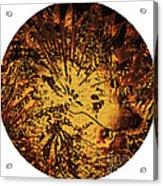 Sun - The Star Sign Of Lion Acrylic Print