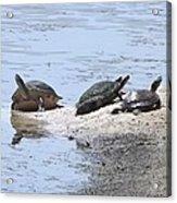 Sun Turtles Acrylic Print