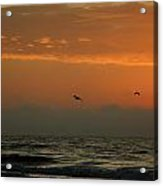 Sun Up With Birds Acrylic Print
