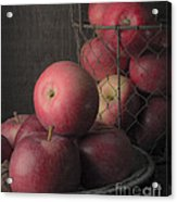Sun Warmed Apples Still Life Standard Sizes Acrylic Print