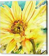 Sun Worshipper Acrylic Print