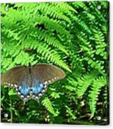 Sunbathing Butterfly Acrylic Print by Diane Mitchell
