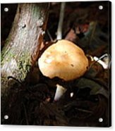 Sunbathing Mushroom Acrylic Print