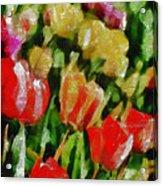 Sunbathing Tulips Acrylic Print