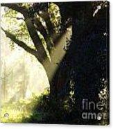 Sunbeam Tree Acrylic Print