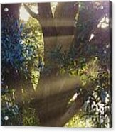 Sunbeams In The Tree Acrylic Print