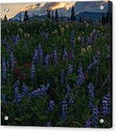 Sunbeams Over Rainier Acrylic Print