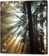 Sunbeams Through Trees Acrylic Print