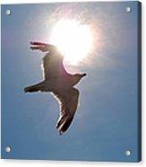 Sunbird Acrylic Print