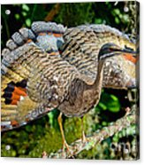 Sunbittern Displaying Acrylic Print