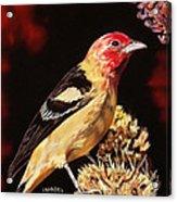 Sunbright Songbird Acrylic Print